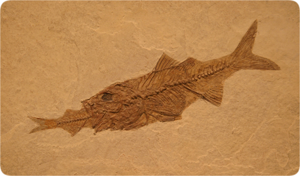 lifesciences-fossil_fish_eating_fish.jpg
