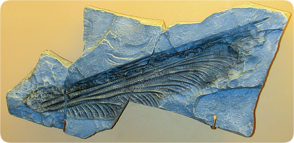 lifesciences-fossilized_dragonfly_wing.jpg