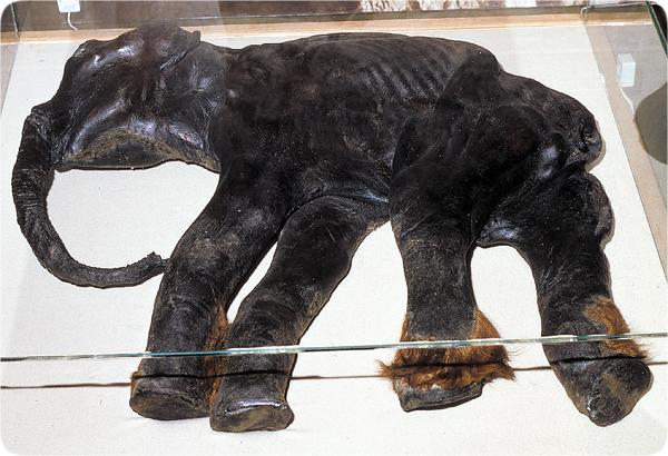 [Image: mammoths-baby_dima.jpg]
