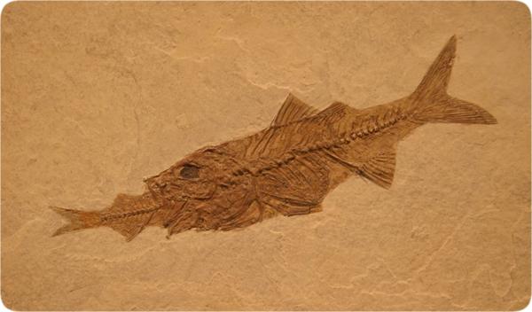 lifesciences-fossil_fish_eating_fish.jpg